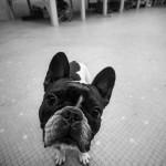 notre chien
